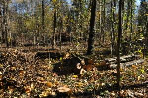 Intervento del comune di Cernusco - bosco del Fontanile e Lodi