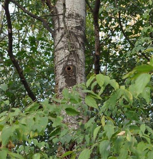 Parco degli aironi bene comune cernusco for Il nido del picchio